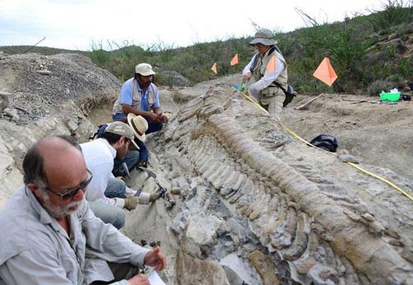 ¿Por qué hay tantos fósiles en México?