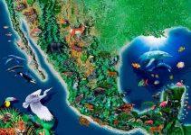 ¿Cuál es la flora y fauna de México?