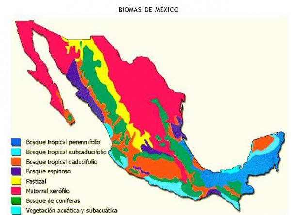 Características de los biomas de México