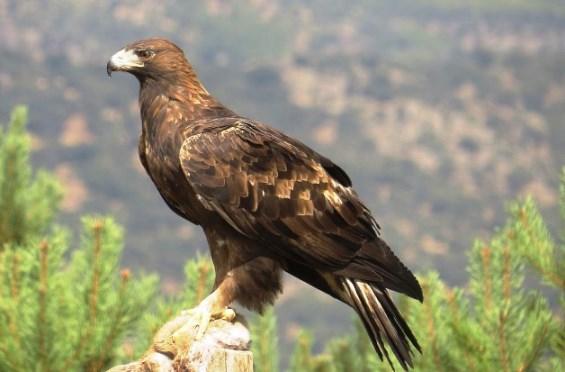¿Cuál es el ave nacional de México?
