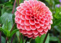 ¿Cuál es la flor nacional de México?