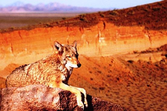 ¿Cuáles son los animales que viven en el desierto mexicano?