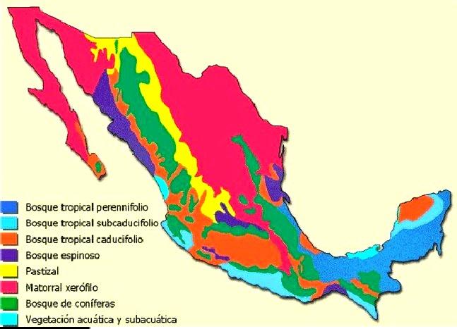 ¿Cuáles son los principales biomas de México?