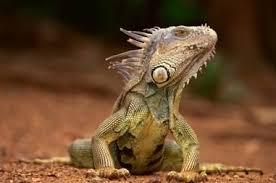 Animales en peligro de extinción en Tabasco